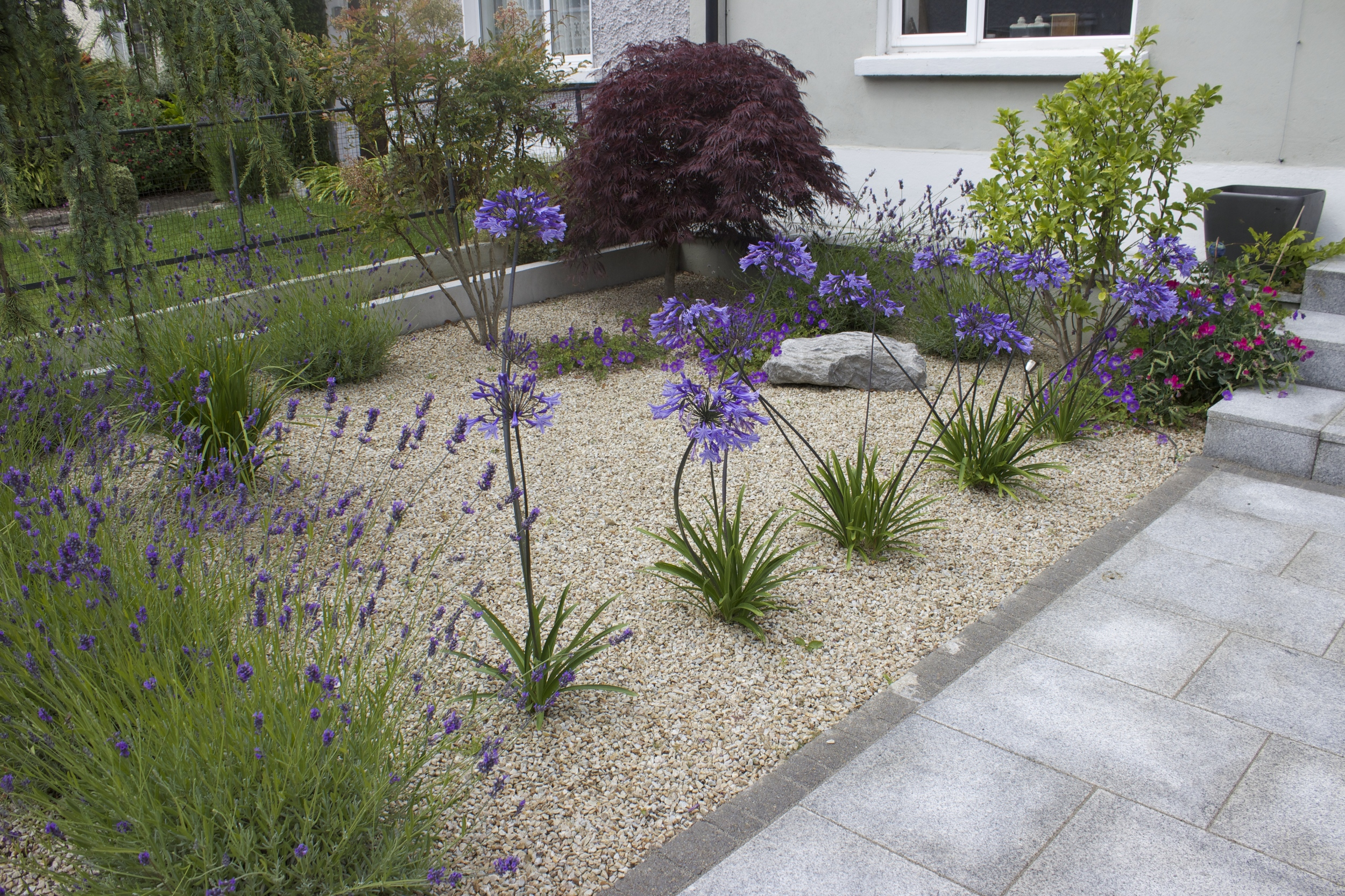 Ornamental planting in front Garden