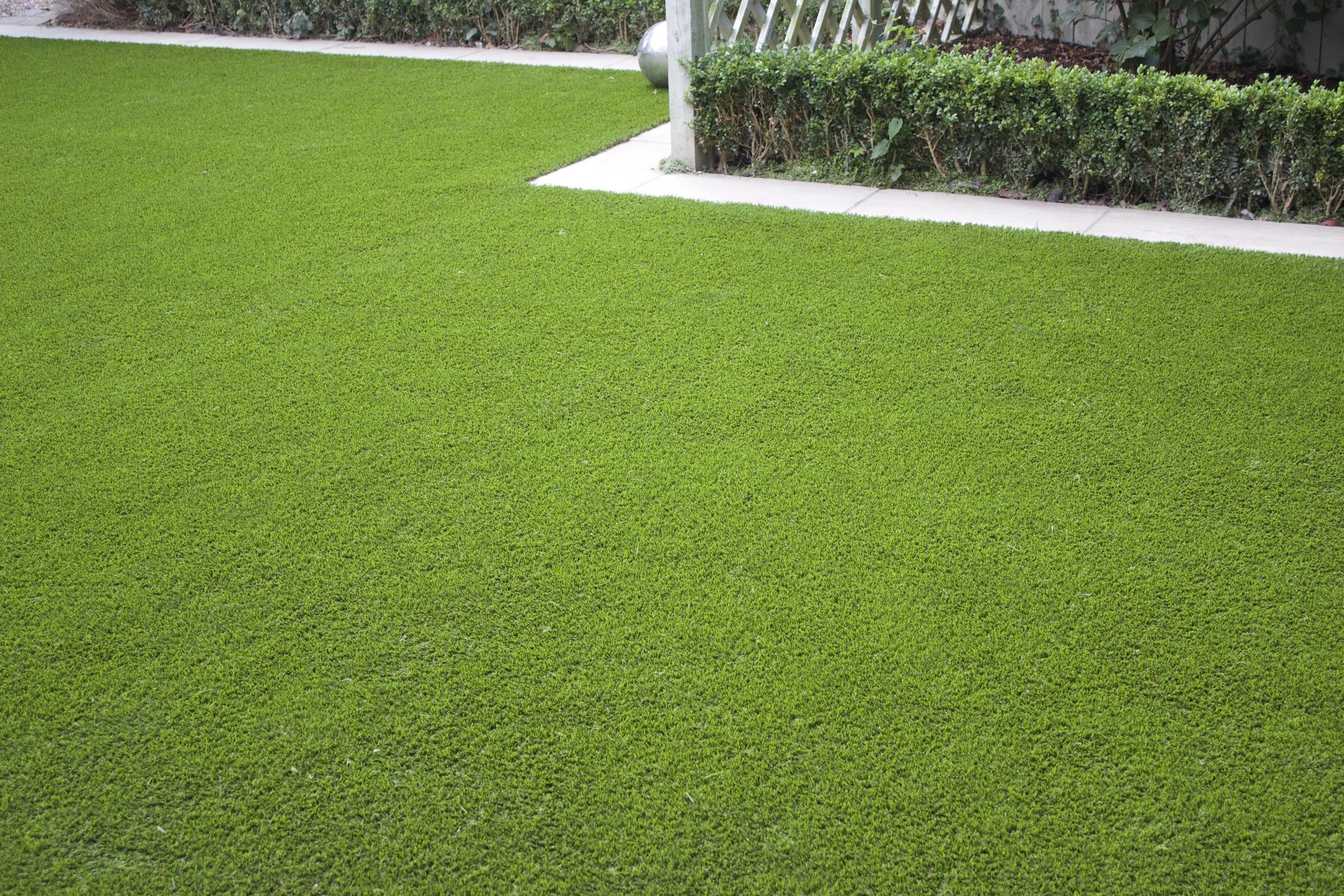 Lawn Turf Design