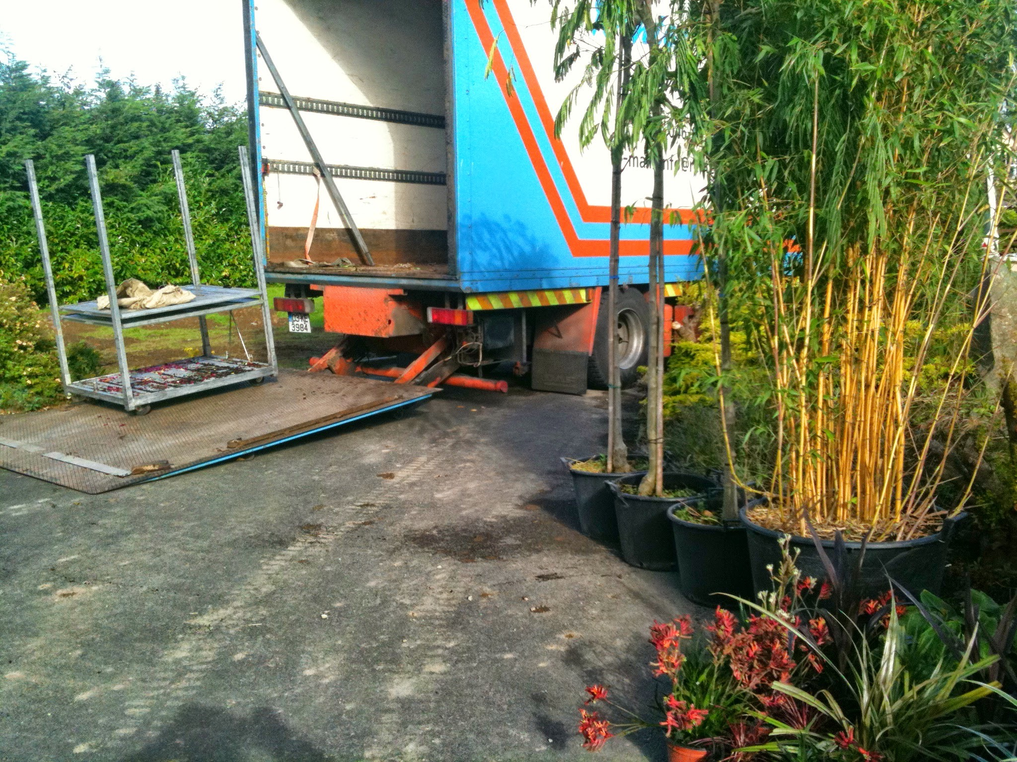 plant delivery