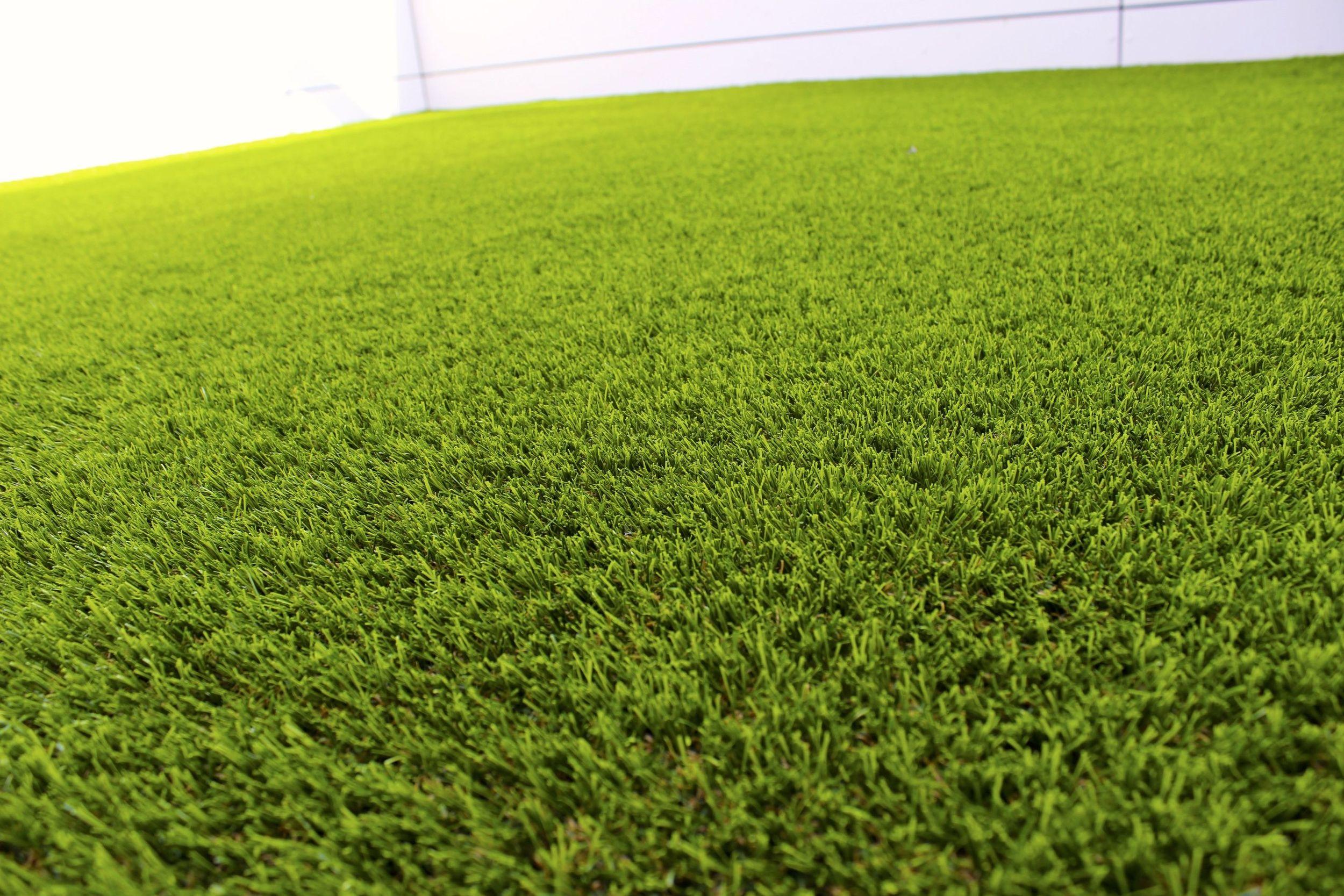 close up of turf