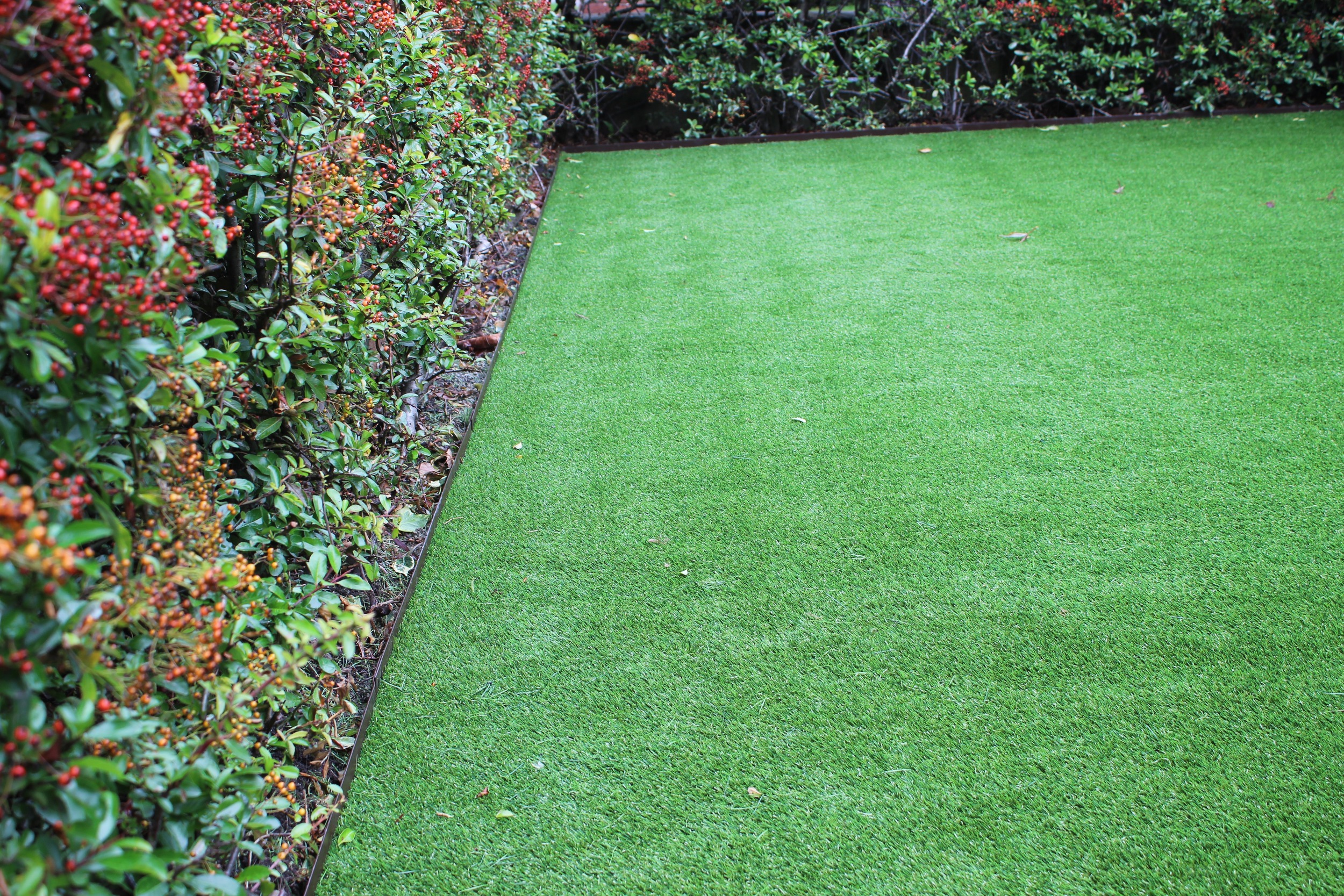 front hedge and lawn.jpg