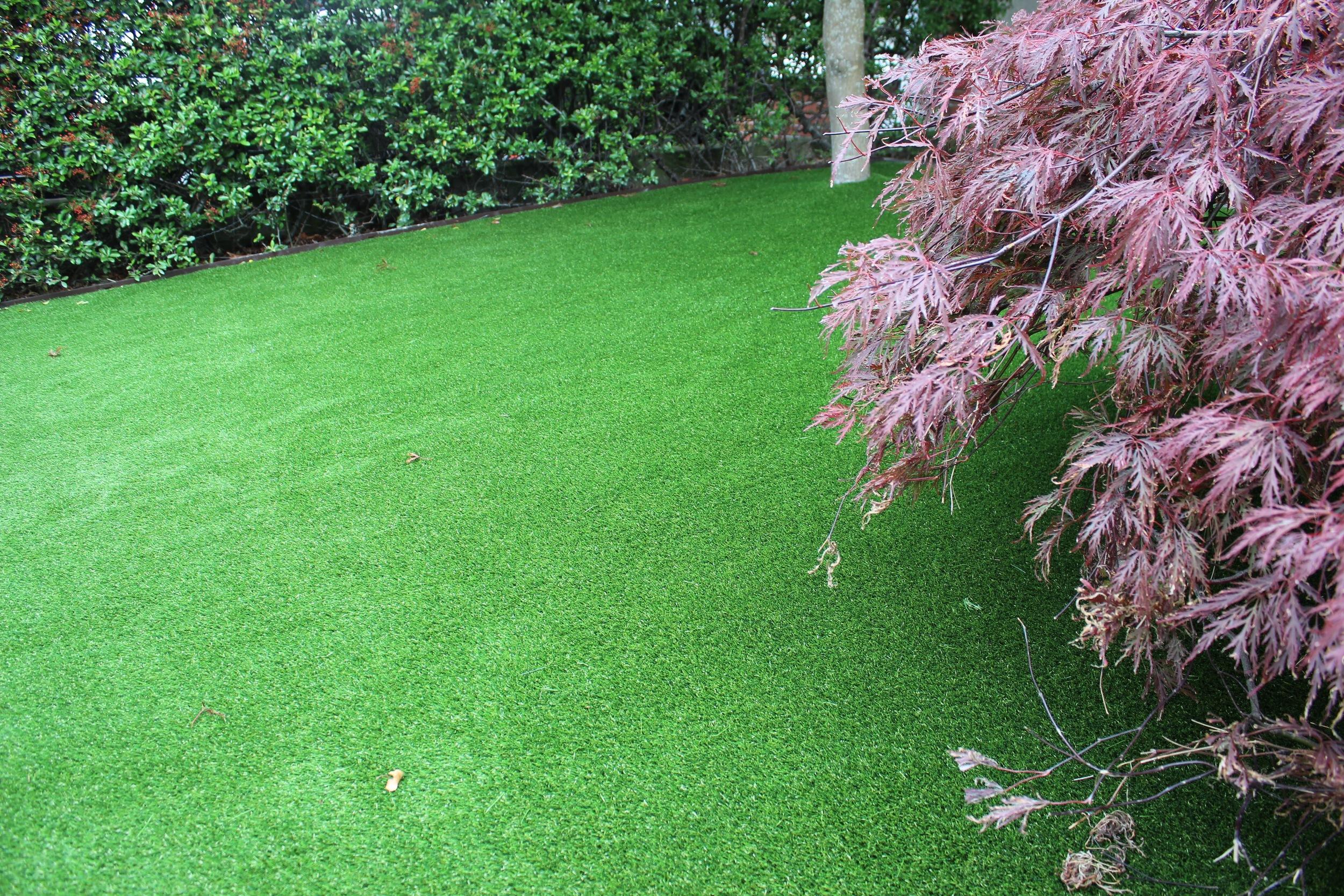 maple tree and grass.jpg