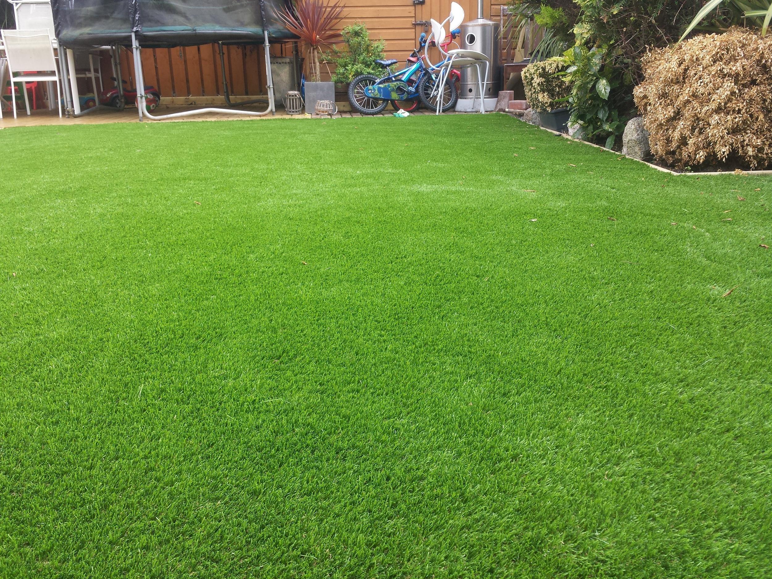 Garden grass .jpg