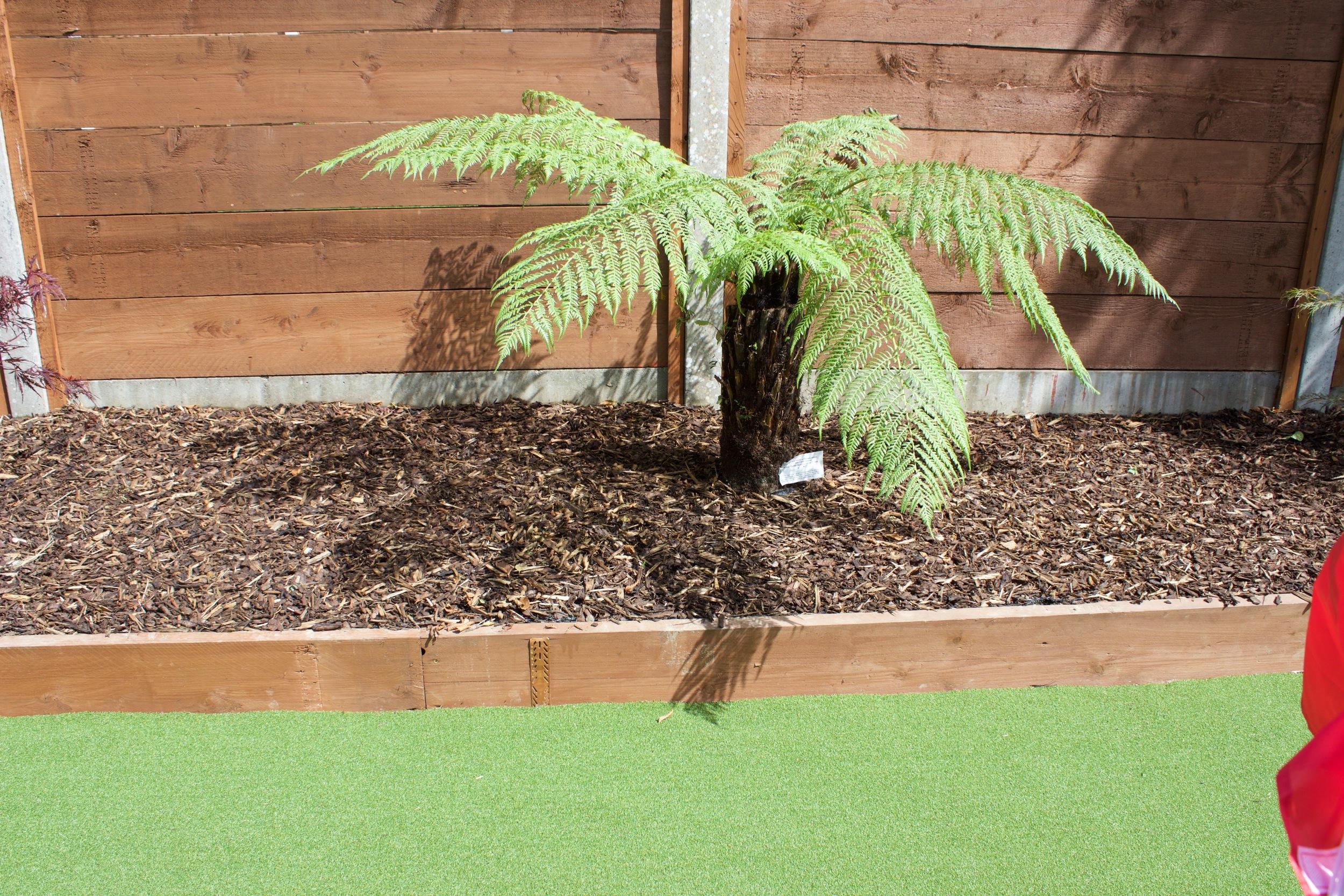 Tree Fern plant