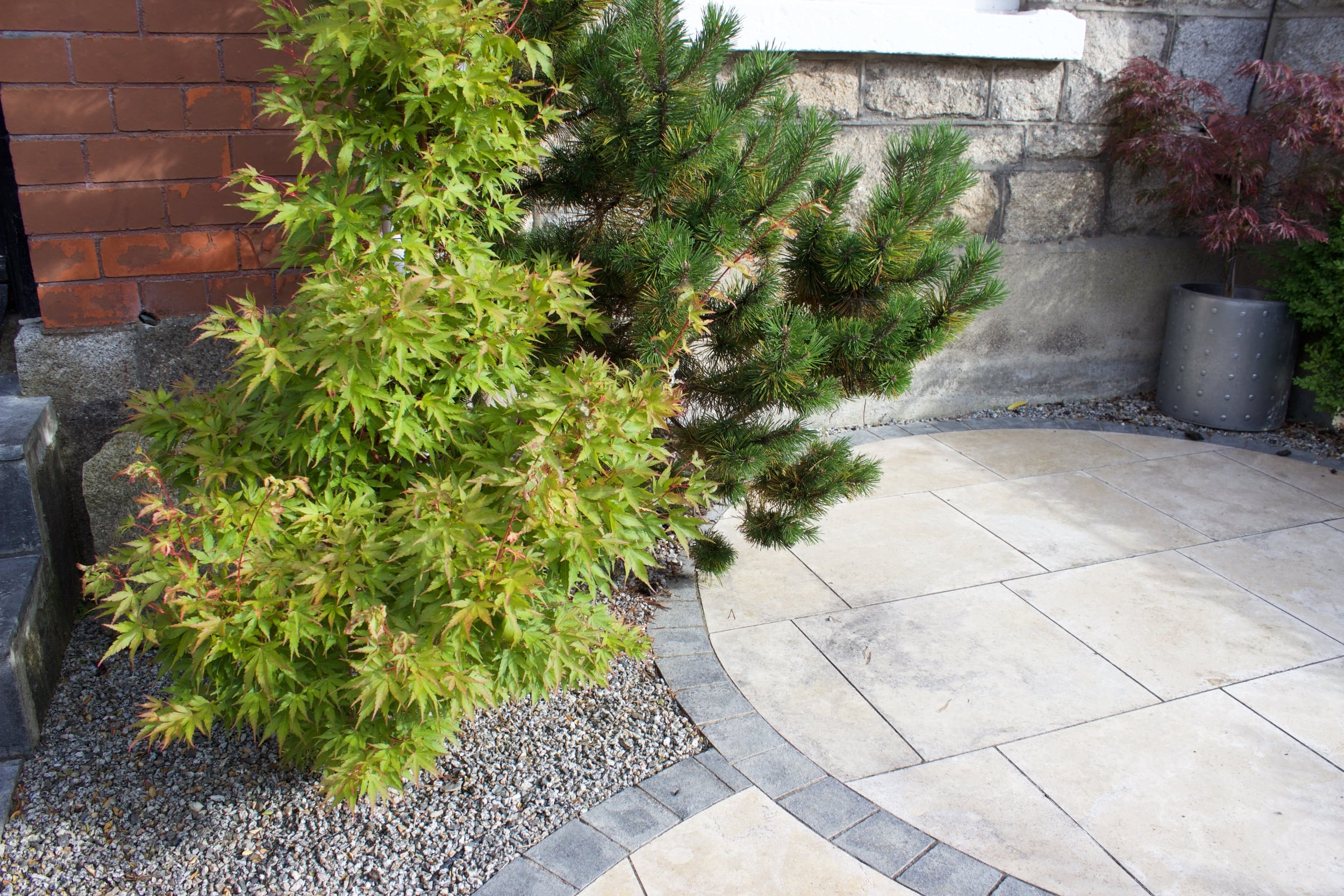 Maple and pine Tree landscaping.jpg