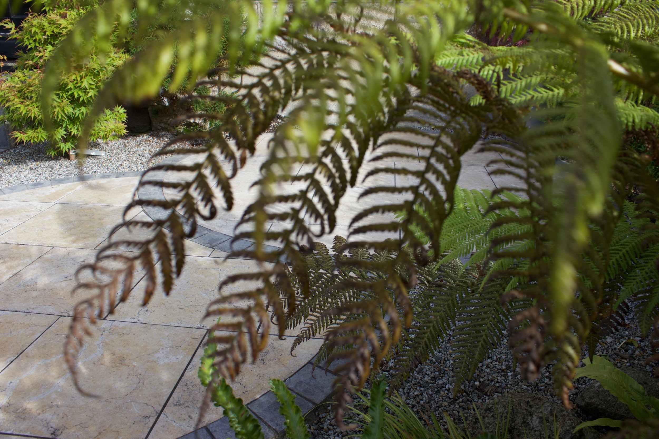 tree ferns.jpg