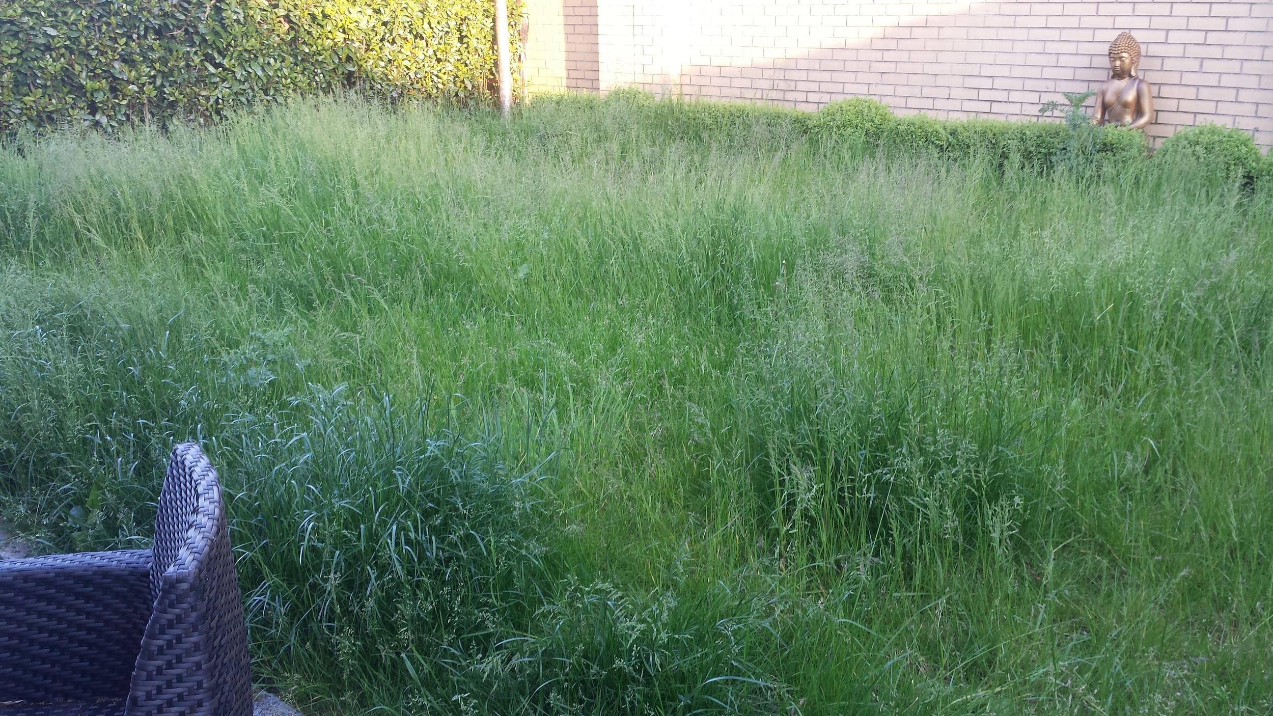 garden before installation