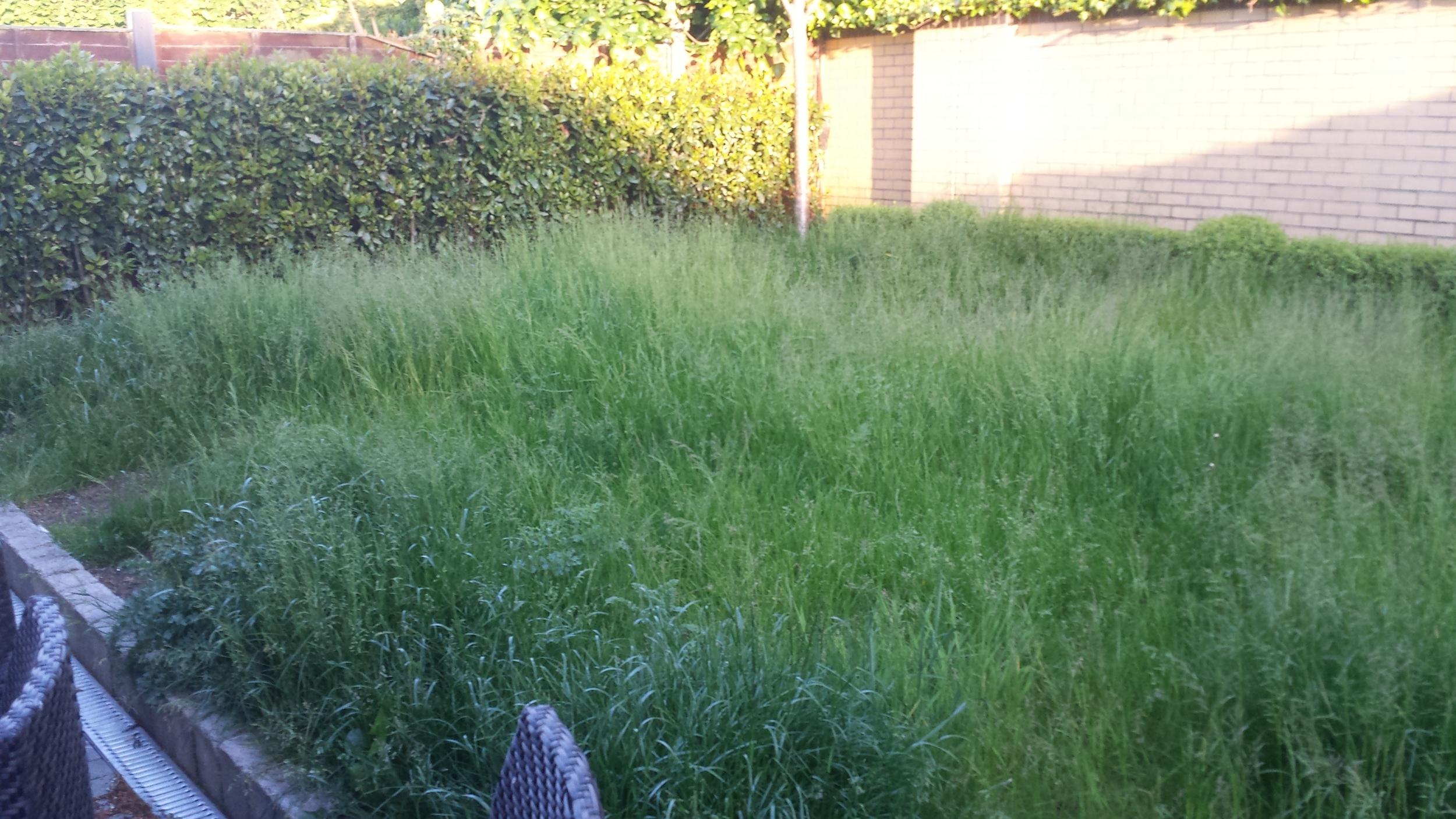 overgrown garden lawn