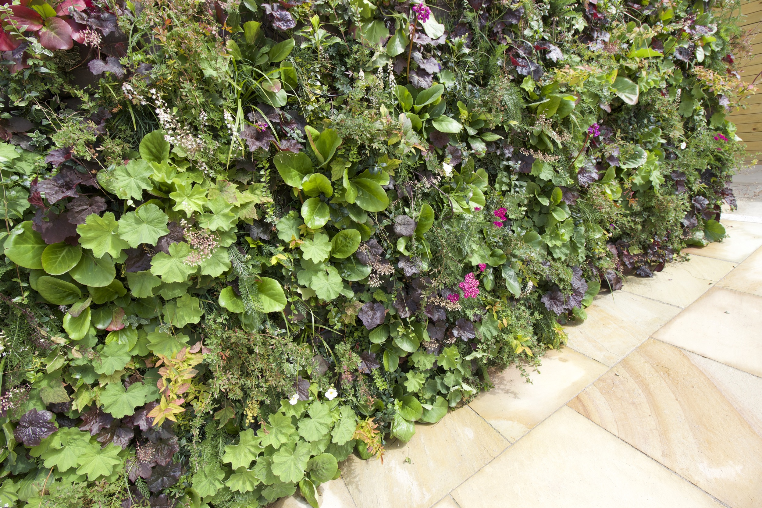 fully planted living wall.jpg