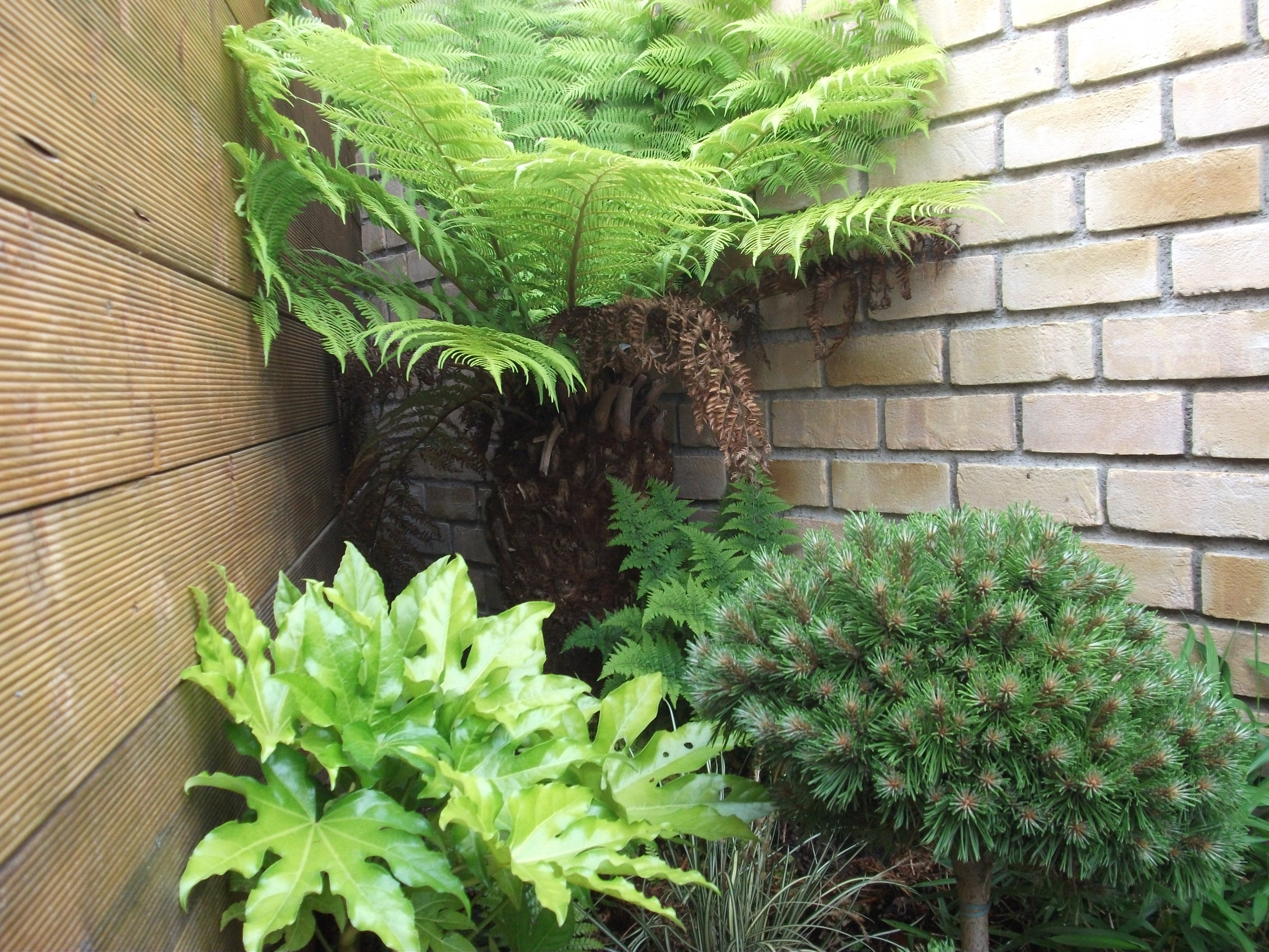 fern tree and planting