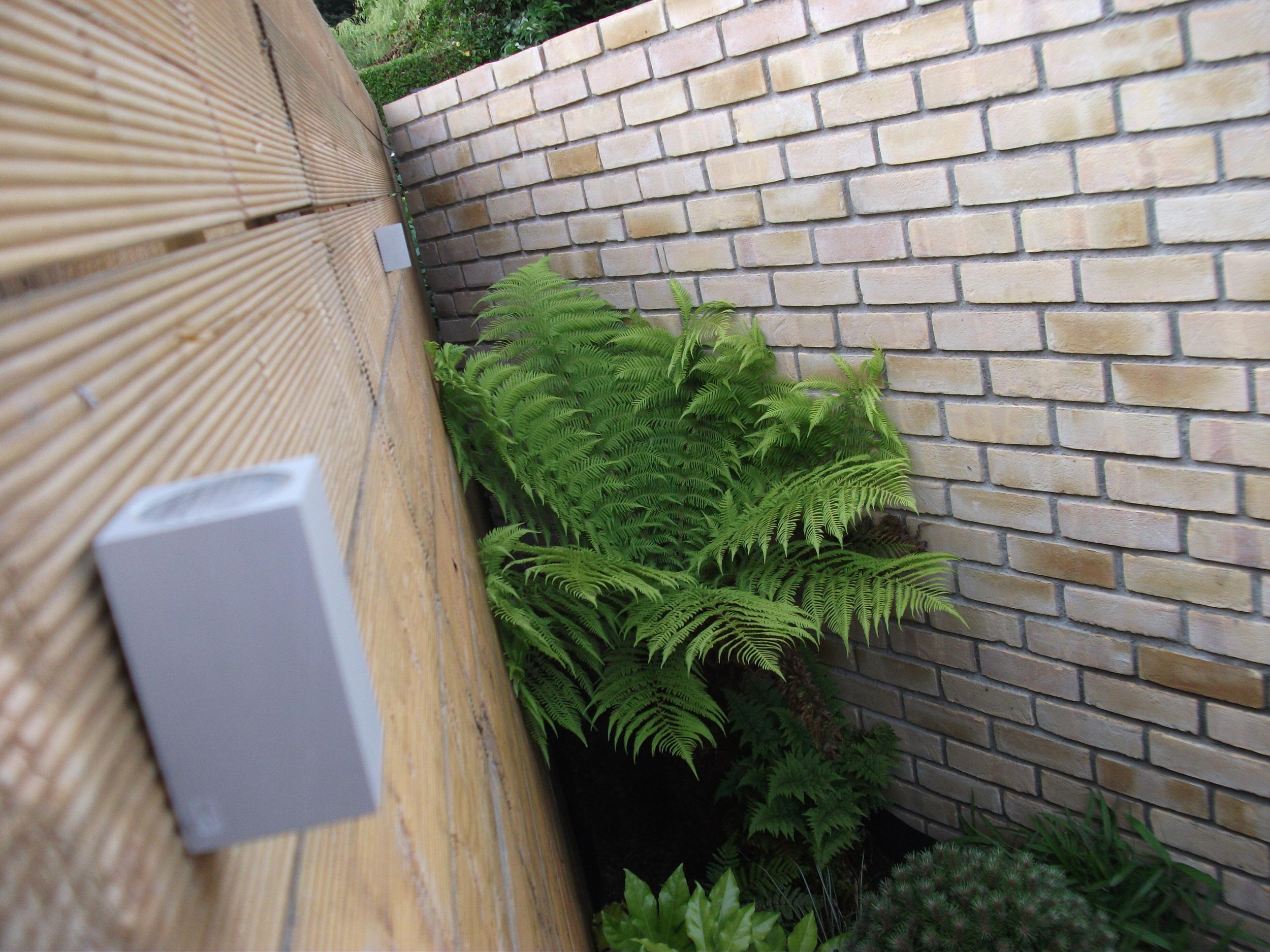 LED and fern.JPG