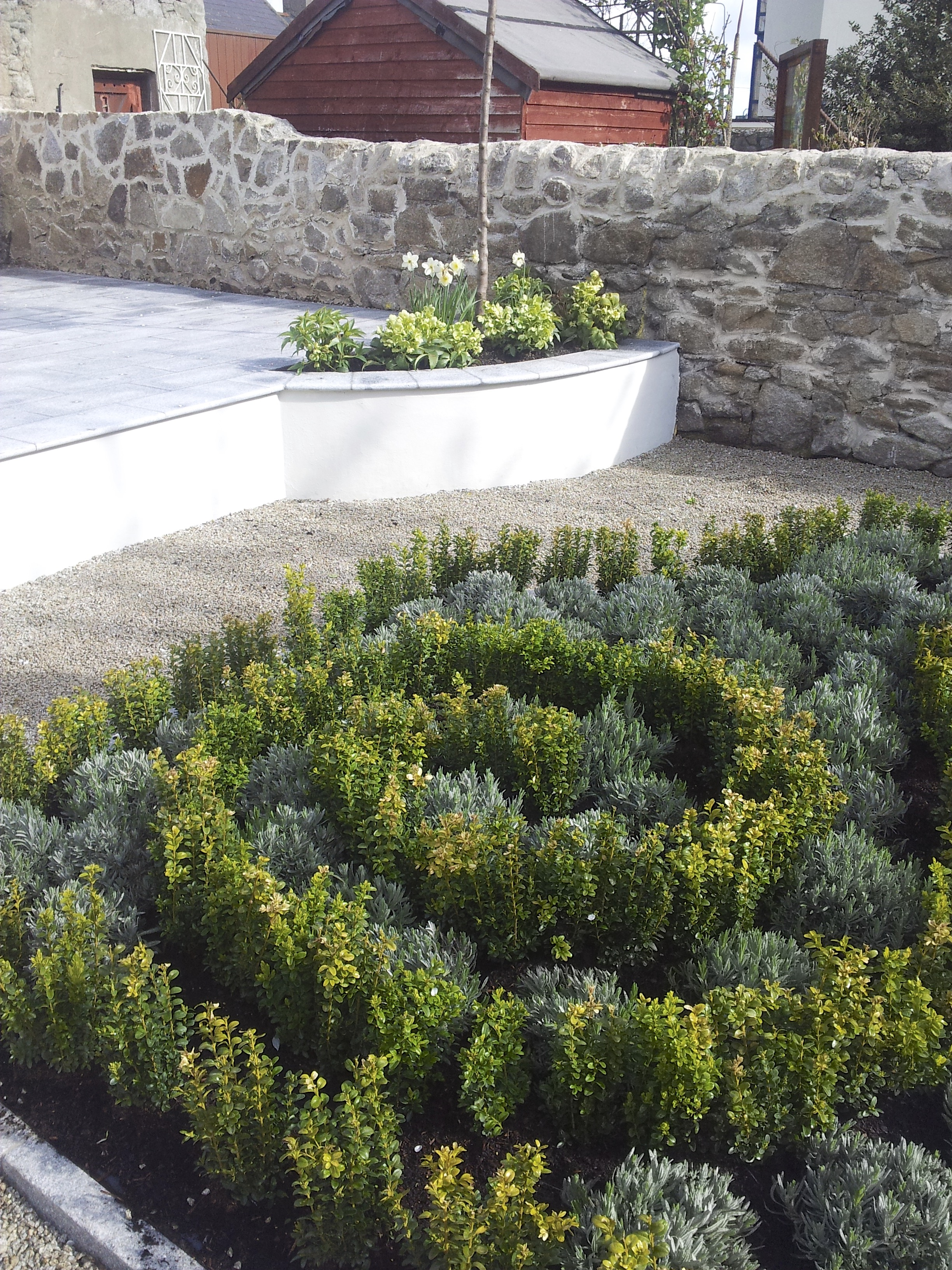buxus spiral and lavender.jpg