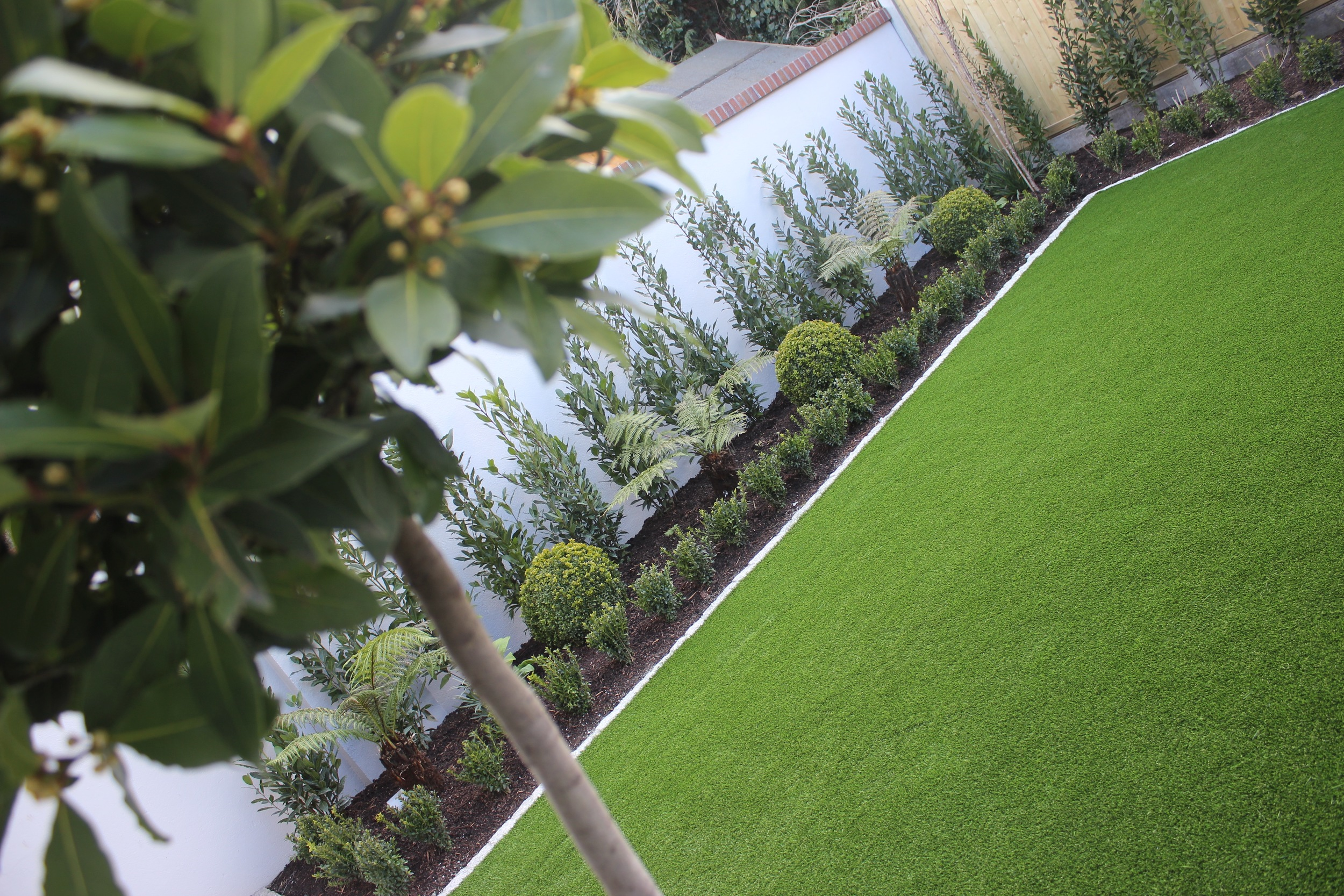 Bay tree and Lawn