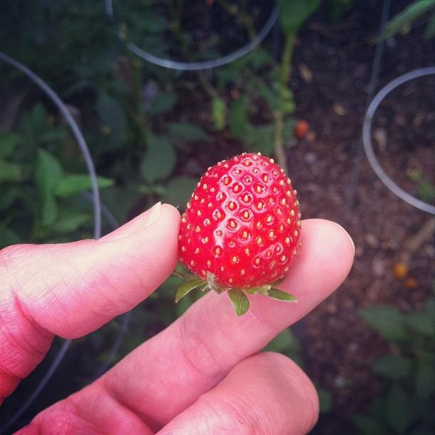 first fr garden