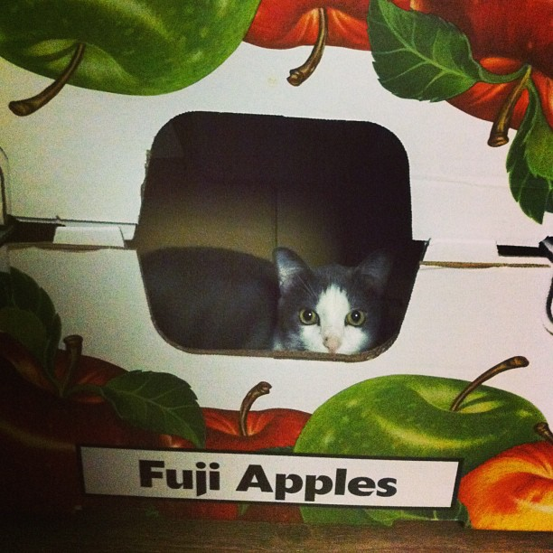 boxes are pure cat magic