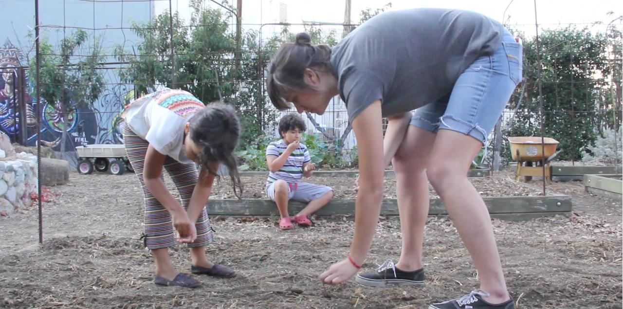 Planting Amaranth at Milagro Allegro Community Garden, Highland Park, California 2015