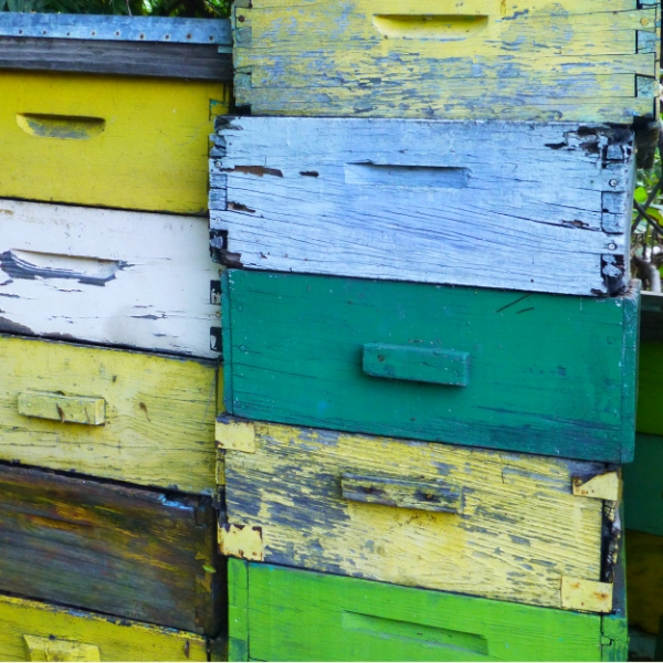 cajas miel.jpg