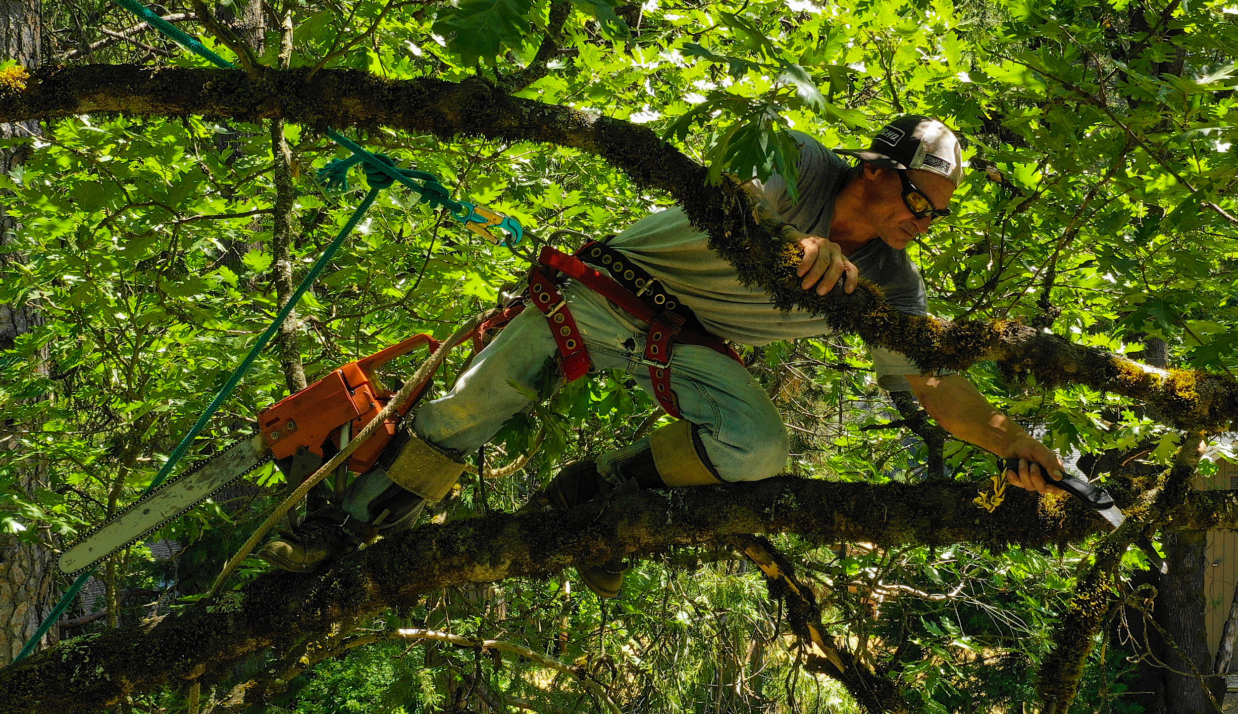 JESSE GARDNER - PROFESSIONAL TREE CLIMBER - A DRONE VIEW