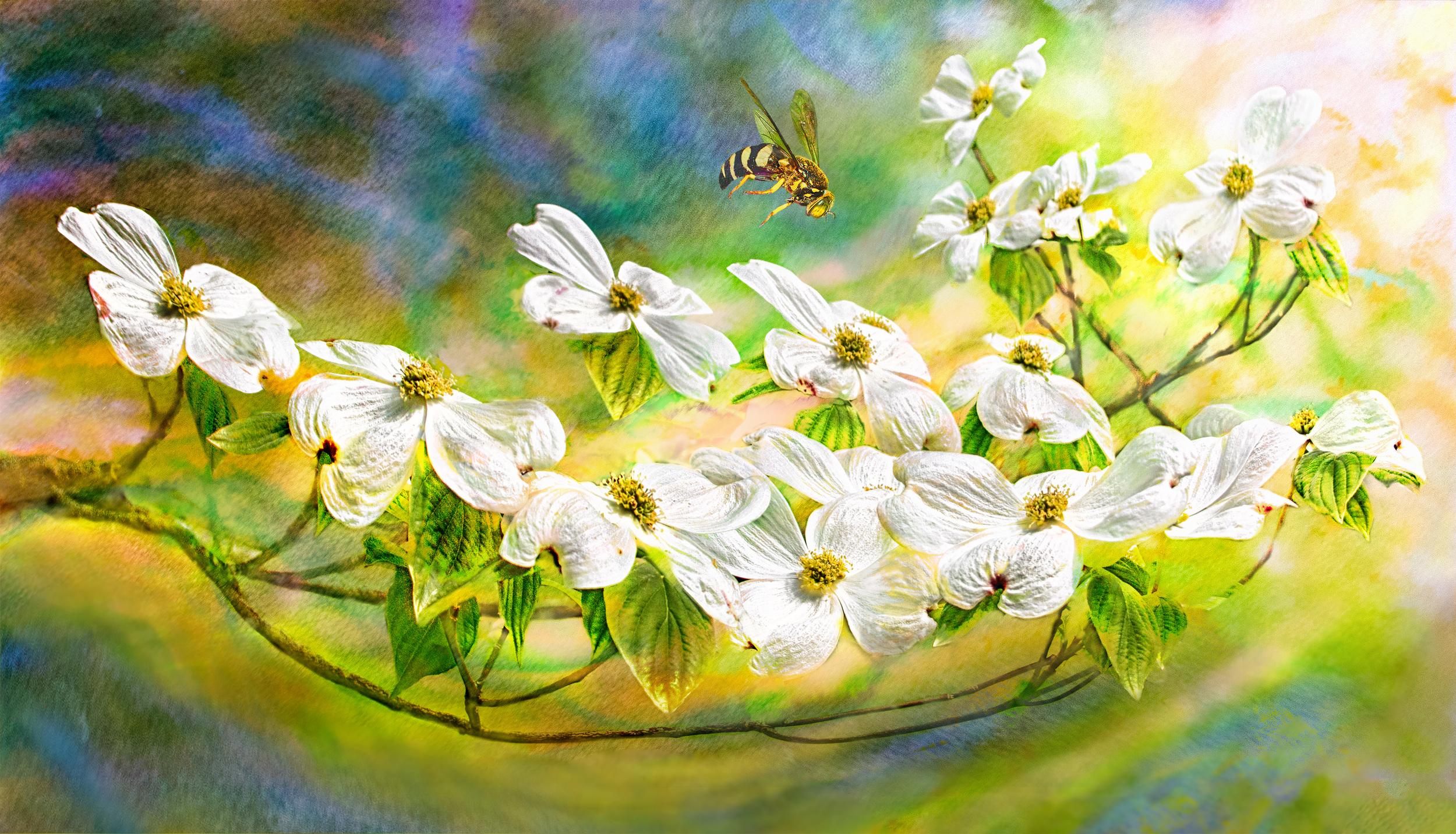 Spirit of Spring IV