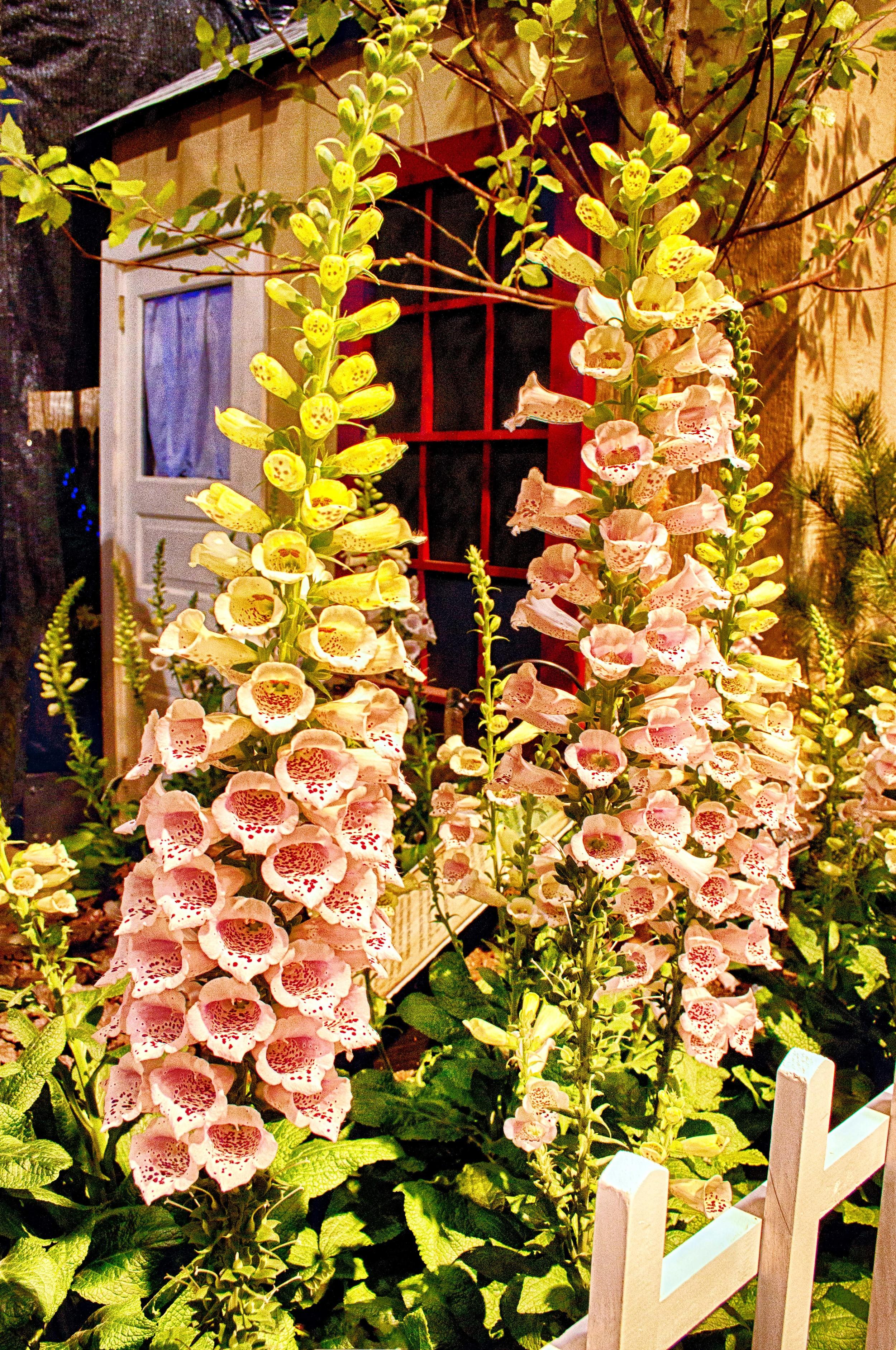 Flowering Bells