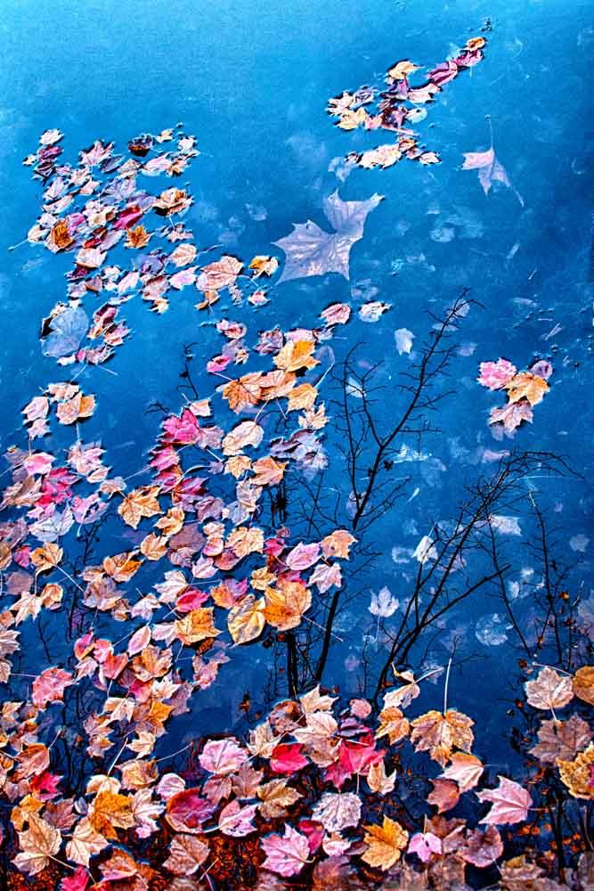 Floating Leaves II.jpg