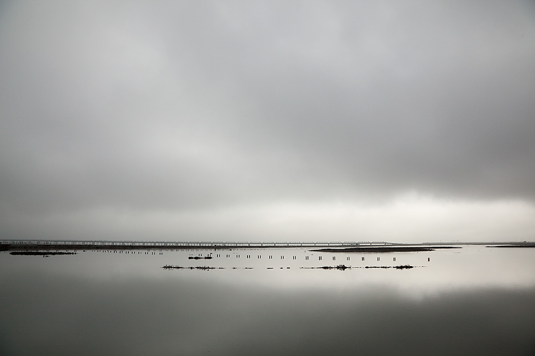 Bayscape, Fremont, CA 2012