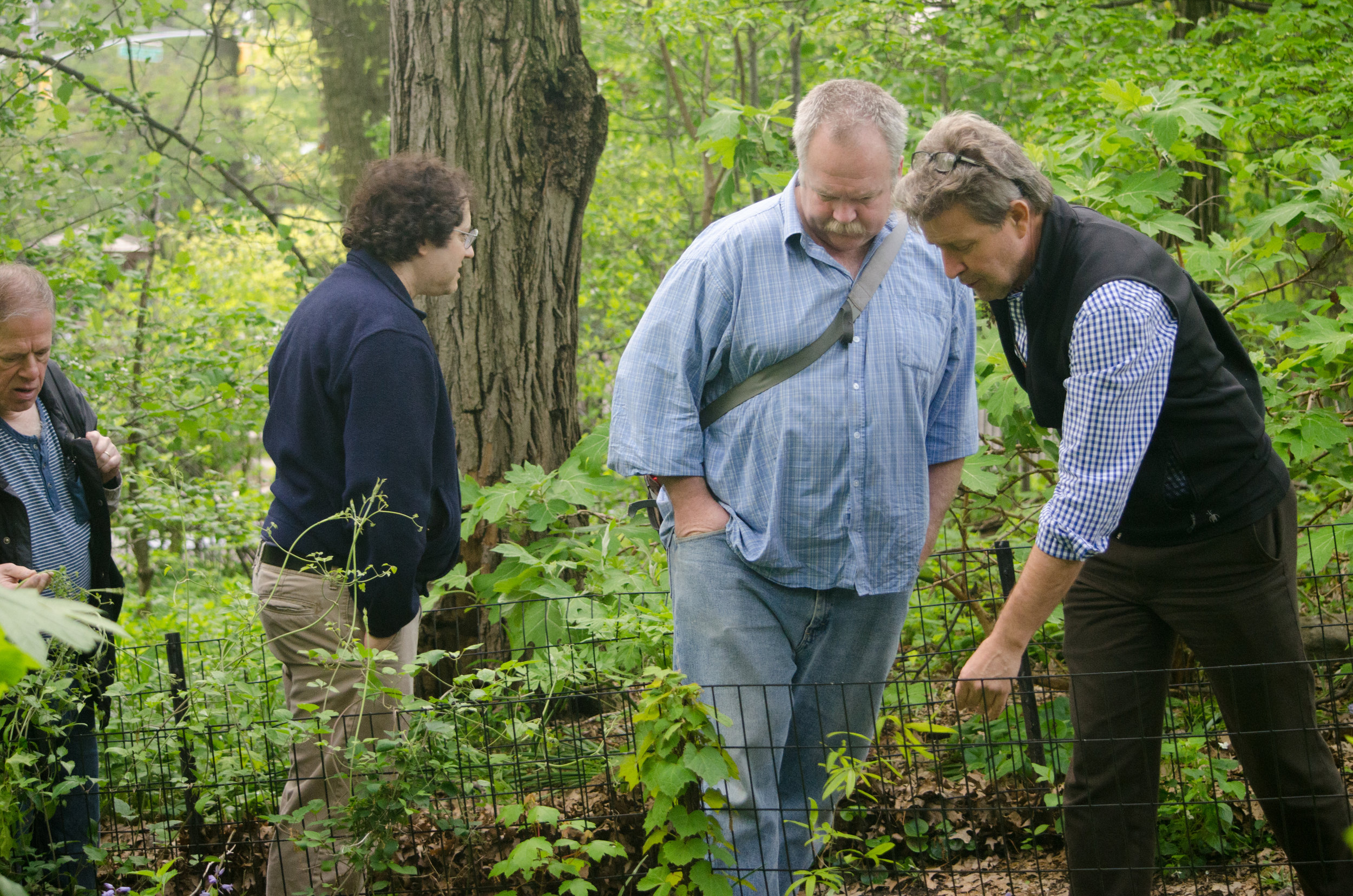 Botany Walk in Central Park with NYBG botanists - May 6