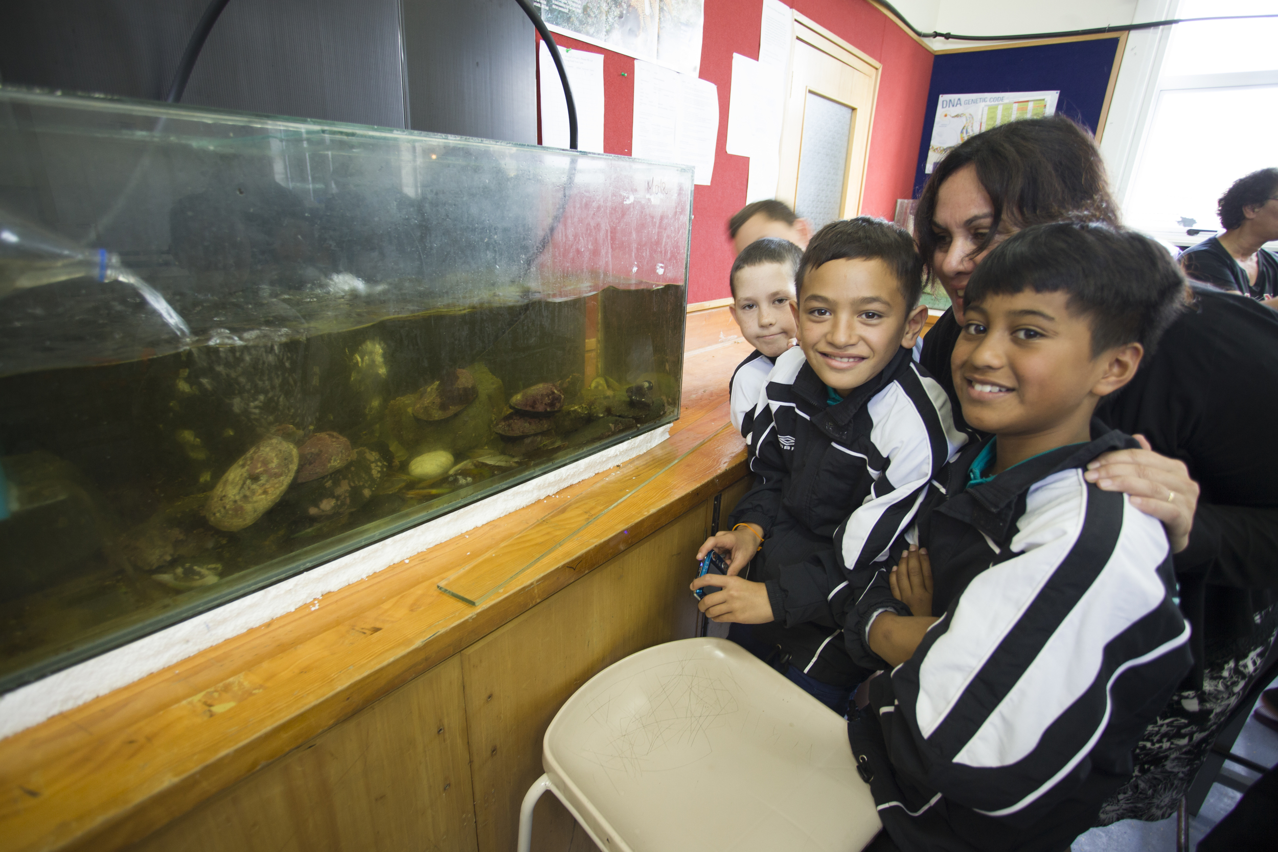 Primary age students investigating Kaitaia College's  paua  breading system.