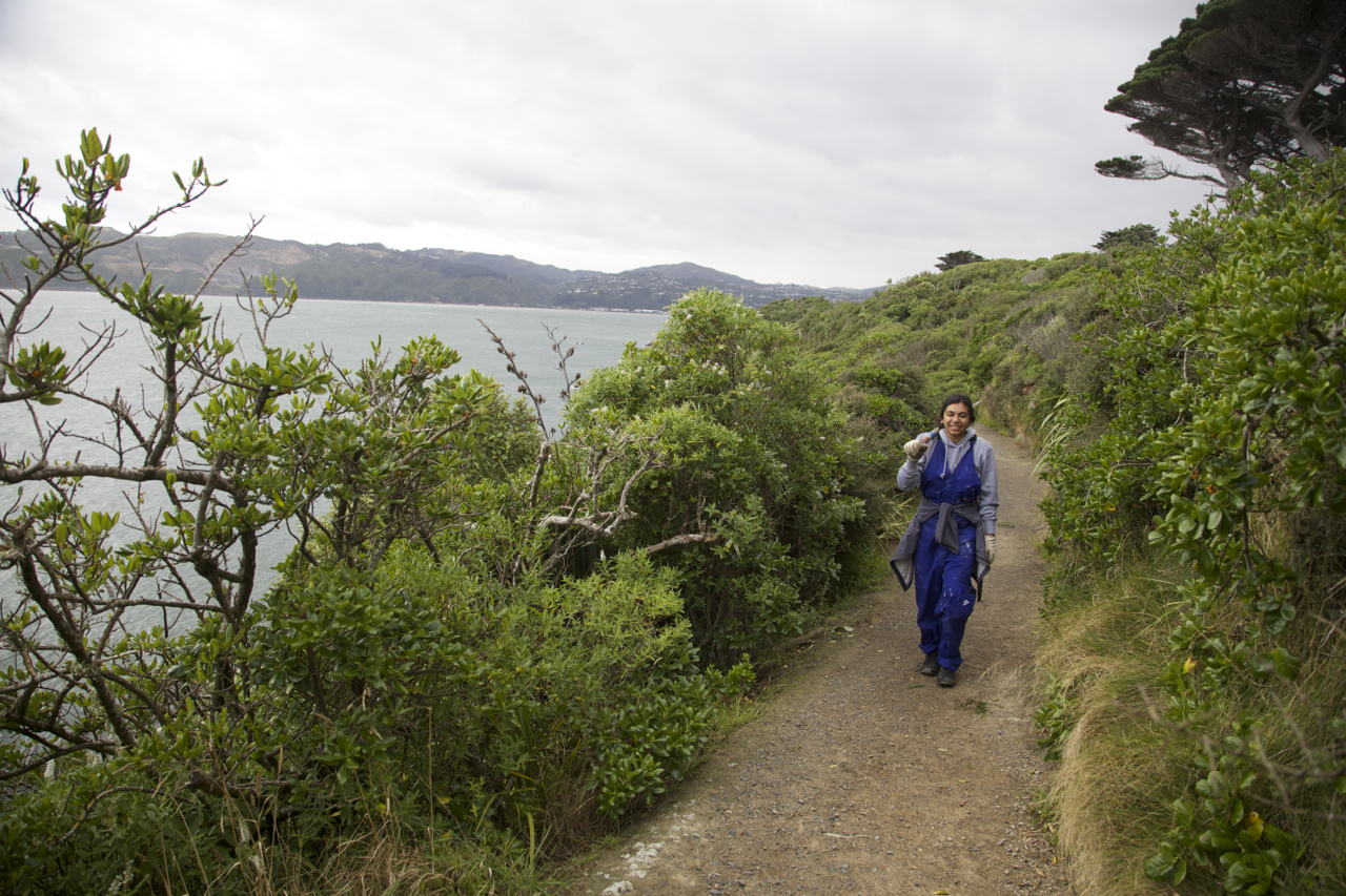 Students volunteer to help keep the tracks on Matiu Somes in good shape.
