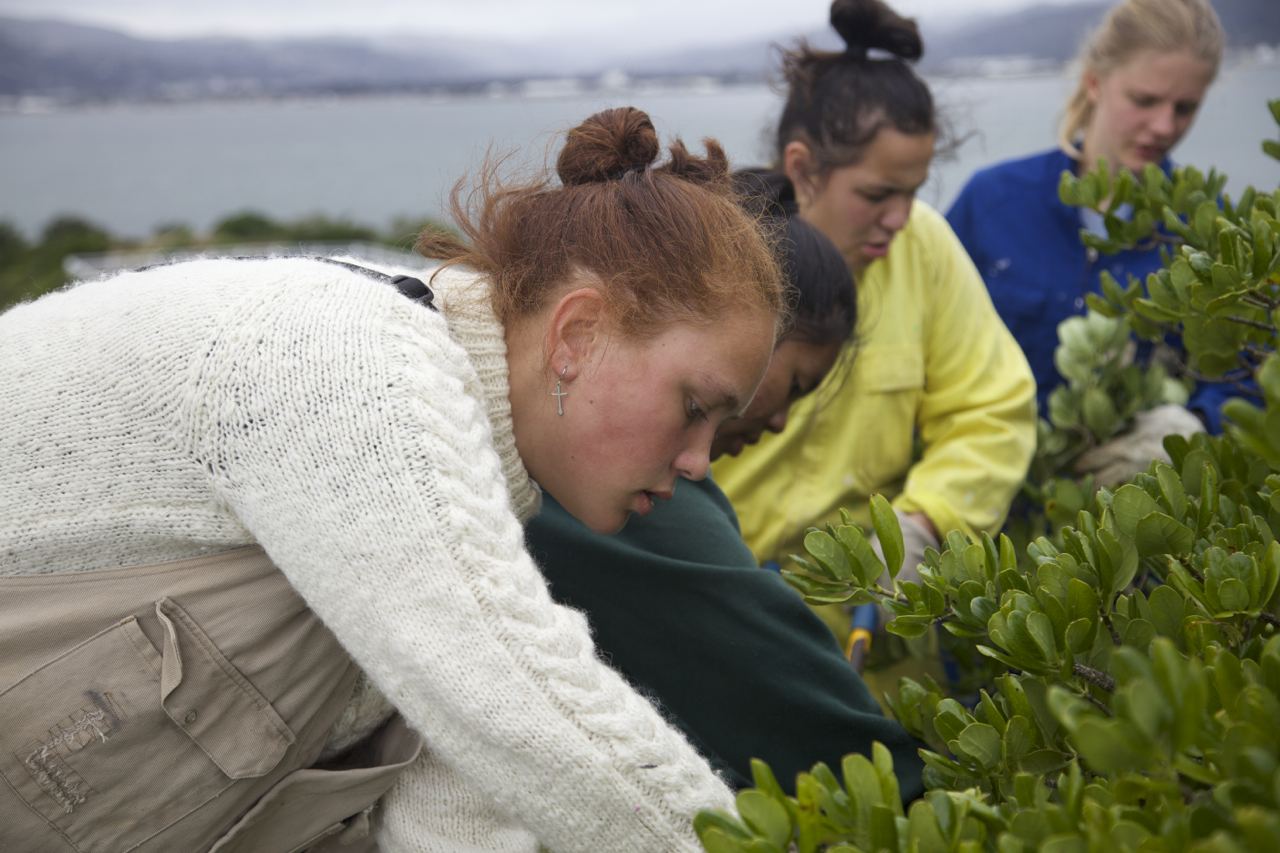 Students from Wellington High School volunteering on Matiu Somes Island