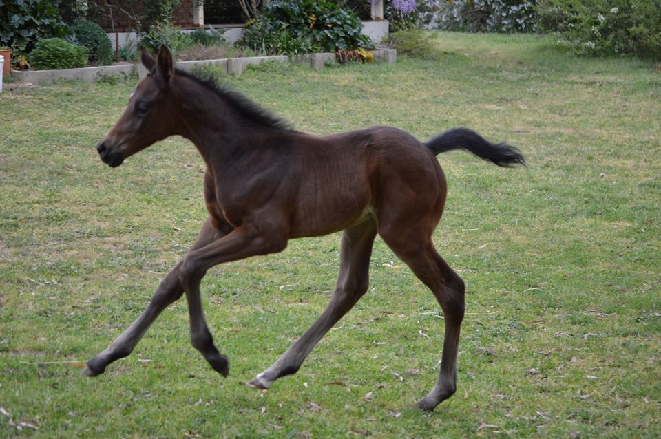 Progeny - filly by Versace