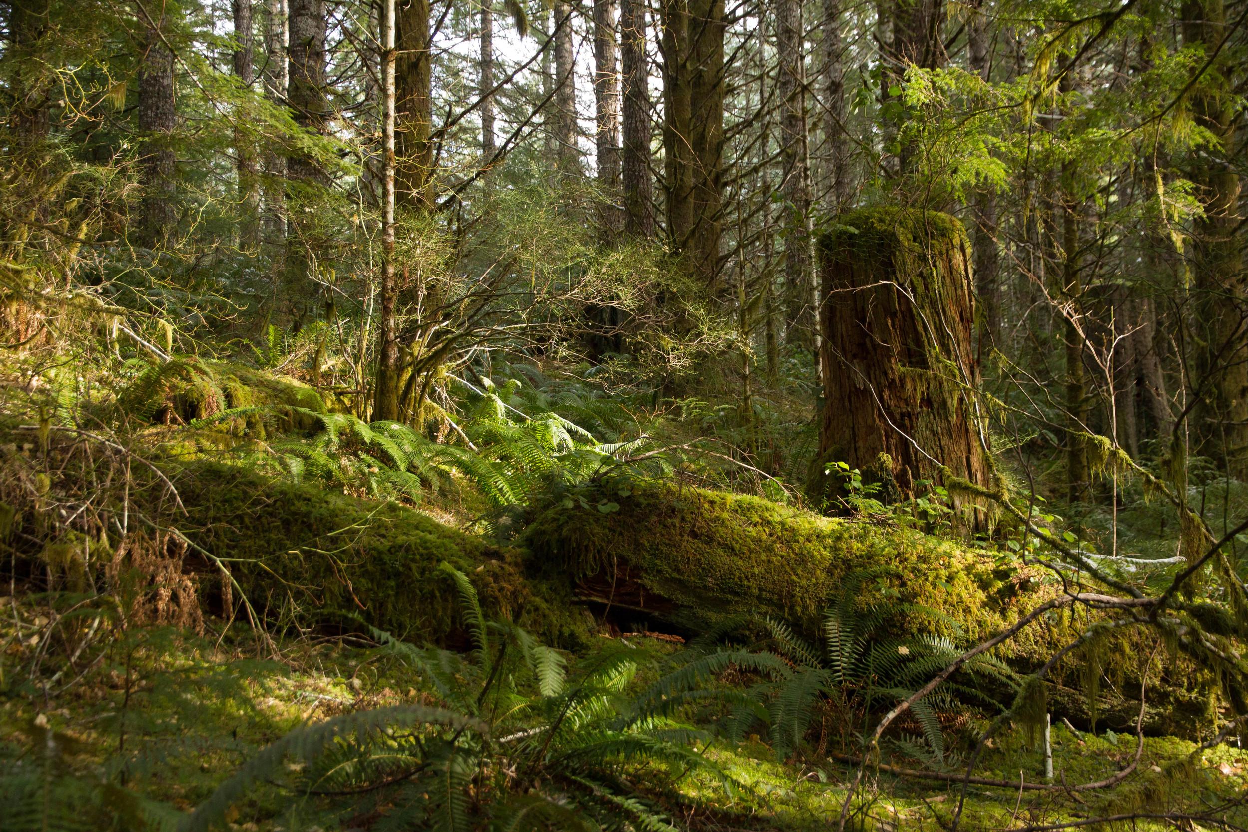 April forest moss.jpg