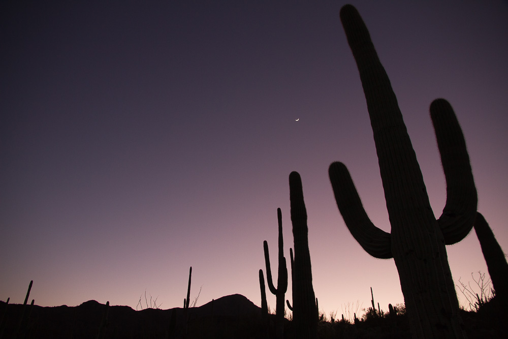 arizona saguaro night-2.jpg