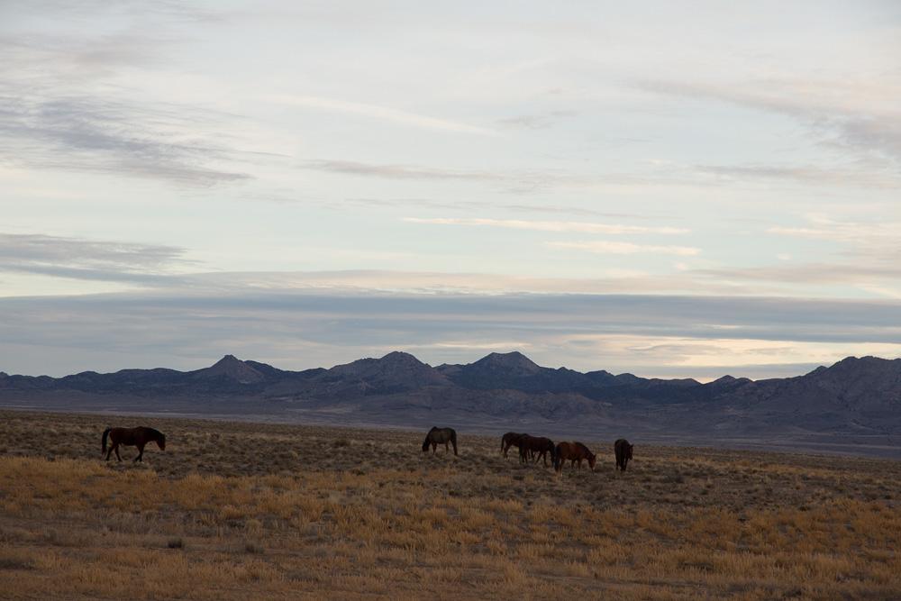 topaz mt horses.jpg