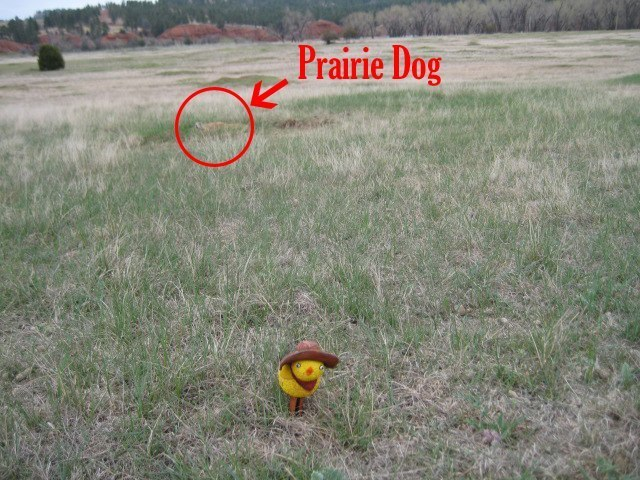 La Pulcina in Prairie Dog Town