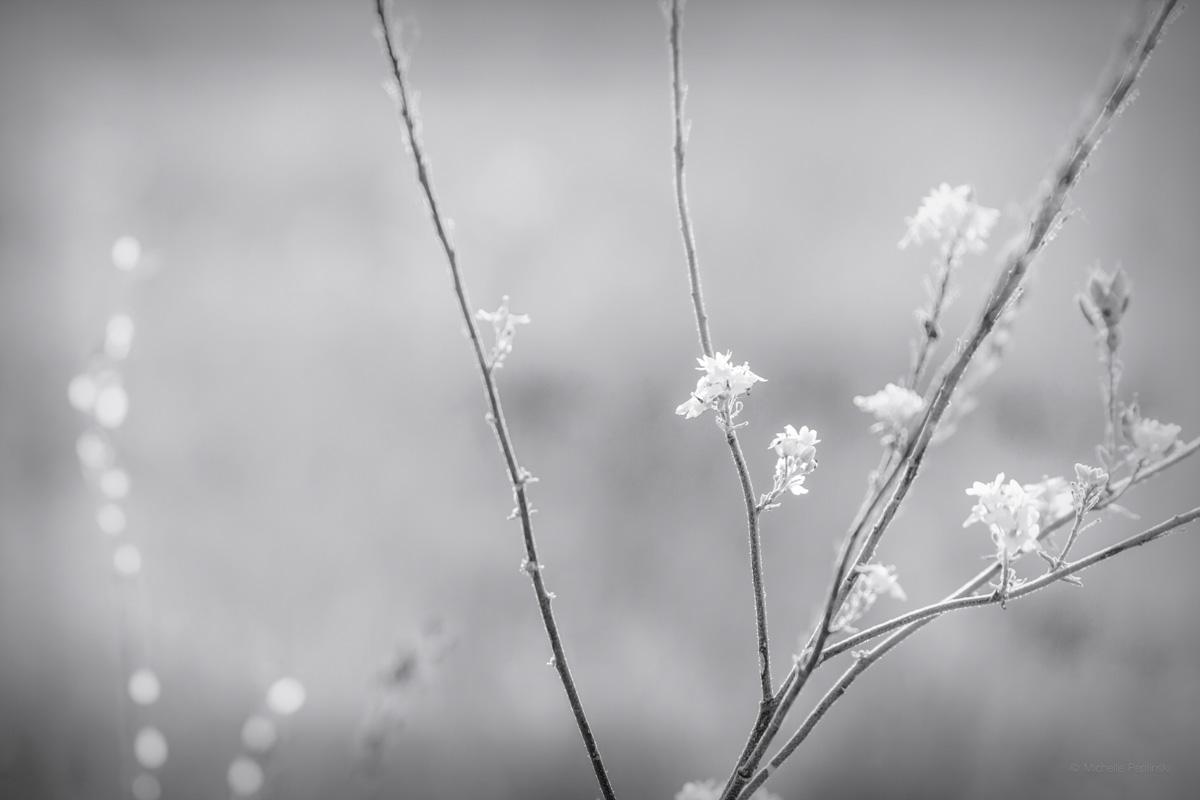 20160829-0183-FINAL-5184x3456-tiny white flowers-Digital-ss.jpg