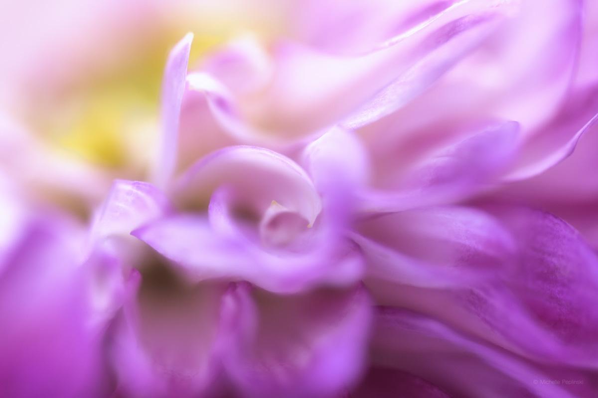 IMG_7077-FINAL-5472x3648-dalia petals soft painterly-Digital-ss.jpg