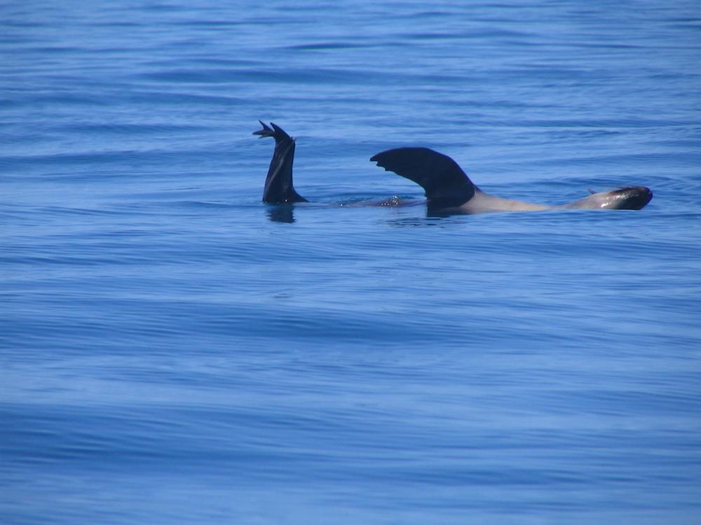 Seals abound near Phillip Island