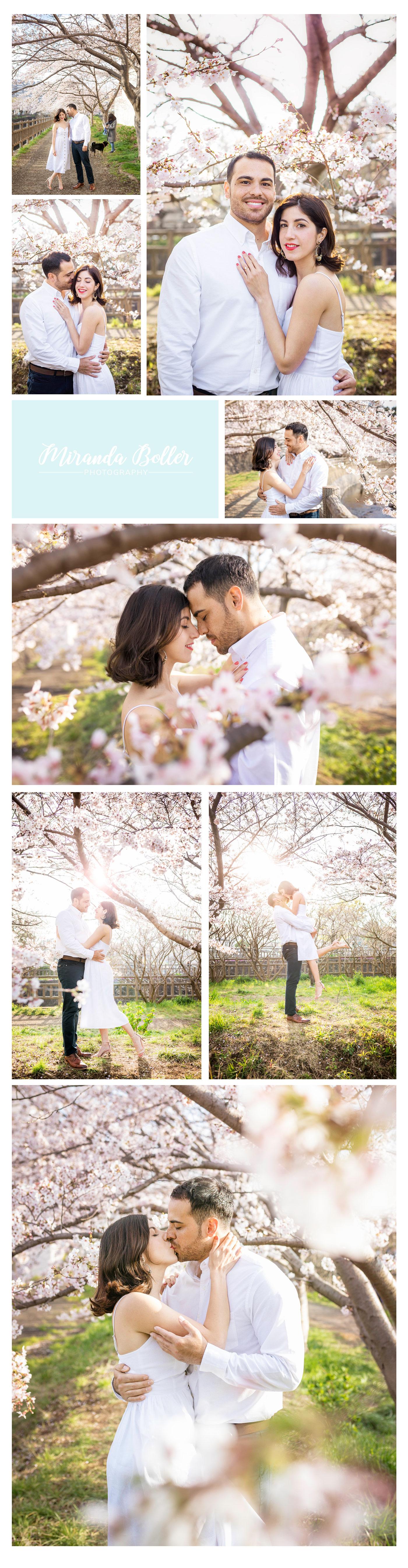 CherryBlossomsJapan06.jpg