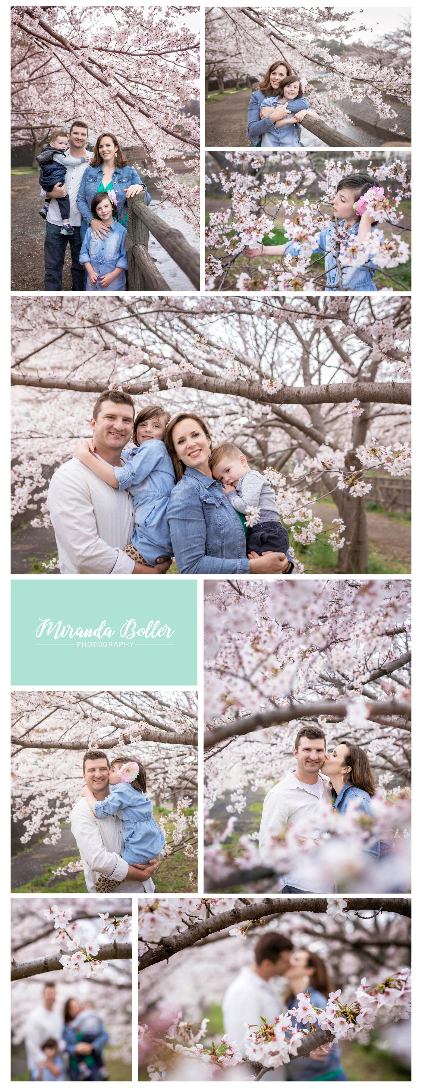 CherryBlossoms05Japan.jpg