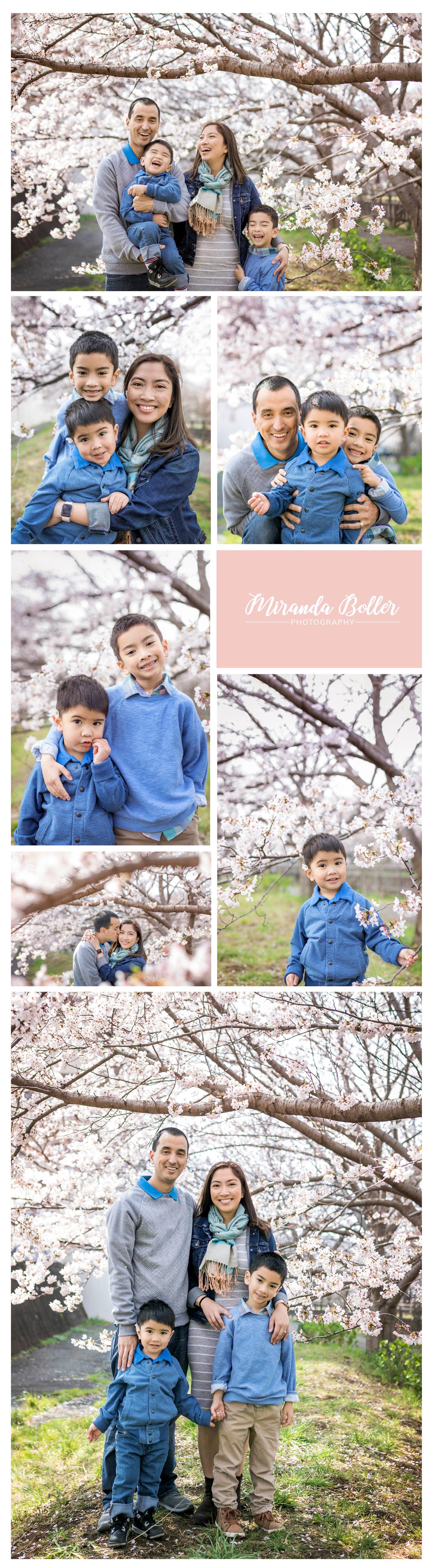 CherryBlssom3.jpg