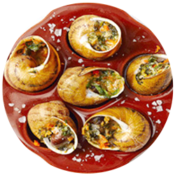 allotment-escargot-5.png
