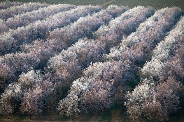 Almond orchard near Los Angeles, California,  Yann Arthus Bertrand