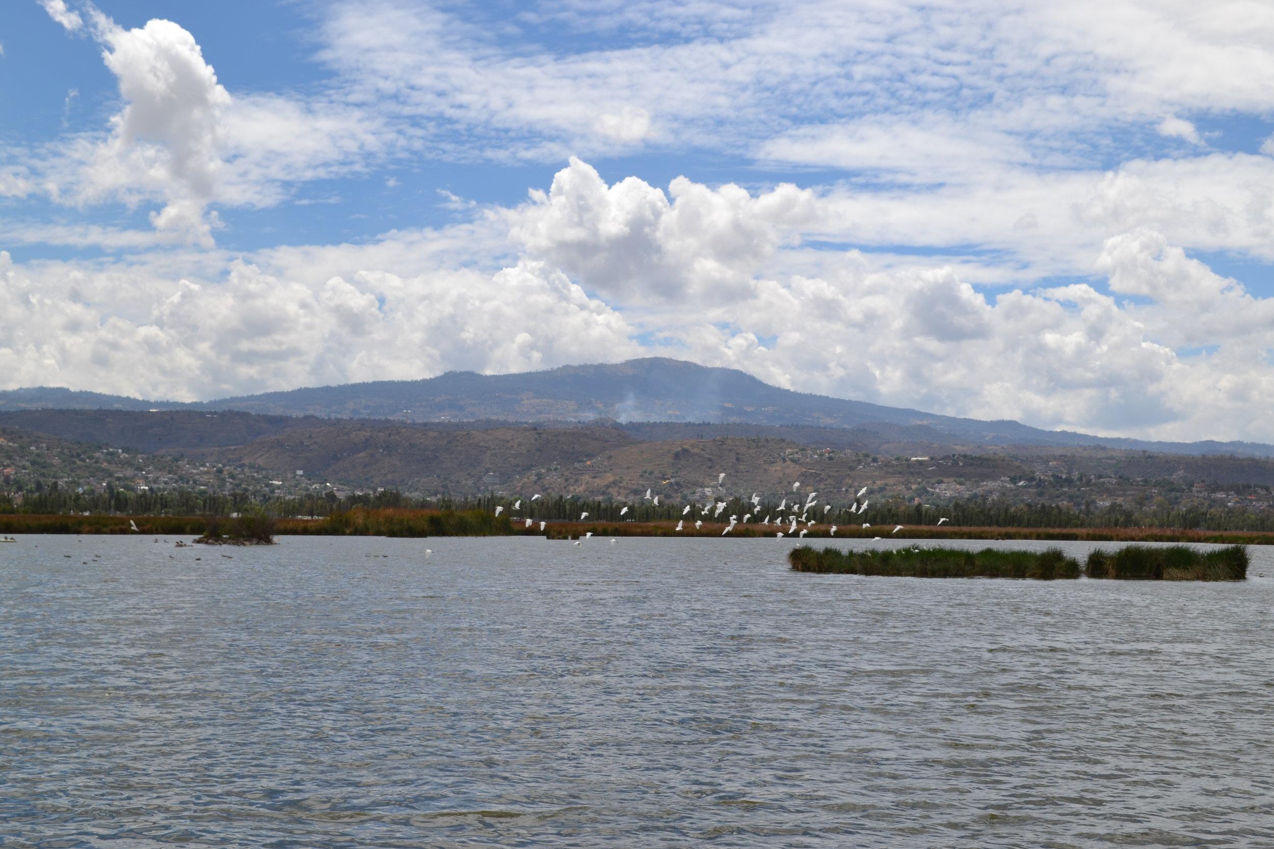 Gonzalo De La Rosa,Xochimilco, Wikimedia Commons