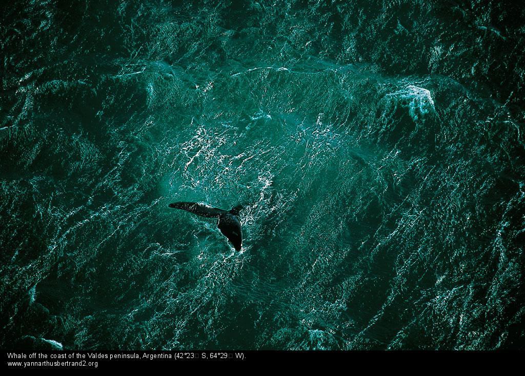 YAB whale argentina_mini.jpg
