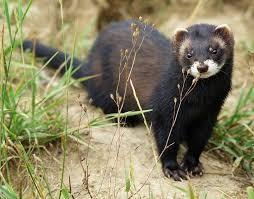 Eurasian Otter by Wikimedia Commons