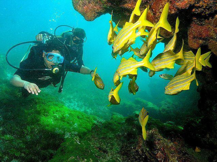 Diving in Fernando de Noronha, Pernambuco, Brazil. (Creative Commons Atribución 2.0 Genérica)