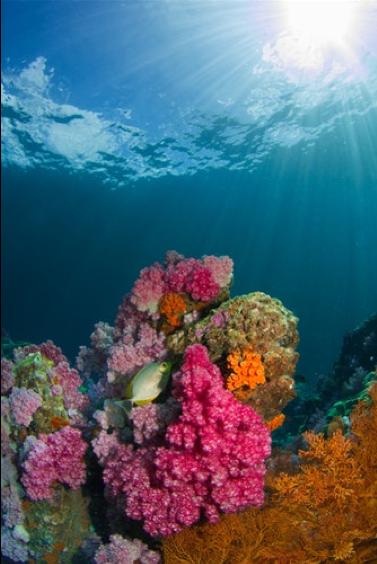 Figure 3 Bright corals, by Milos Prelevic via Unsplash.com