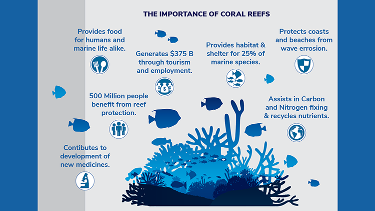 Coral-Reef-Infographic-04.png