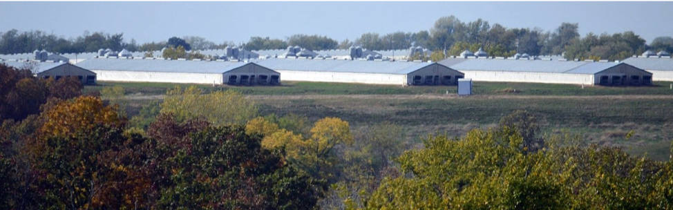 Figure 1 Concentrated animal feeding operation (CAFO), Unionville, Missouri, United States, owned by Smithfield Foods via Socially Responsible Agricultural Project
